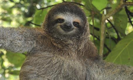 sloth_blog